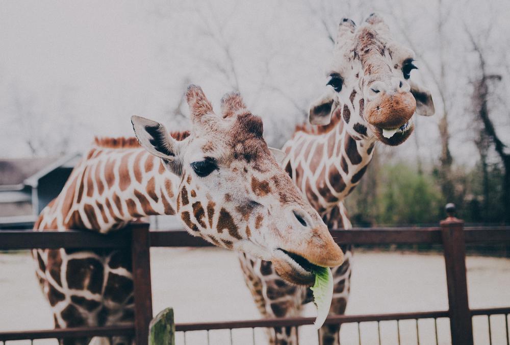 Zoo33 (1 of 1).jpg