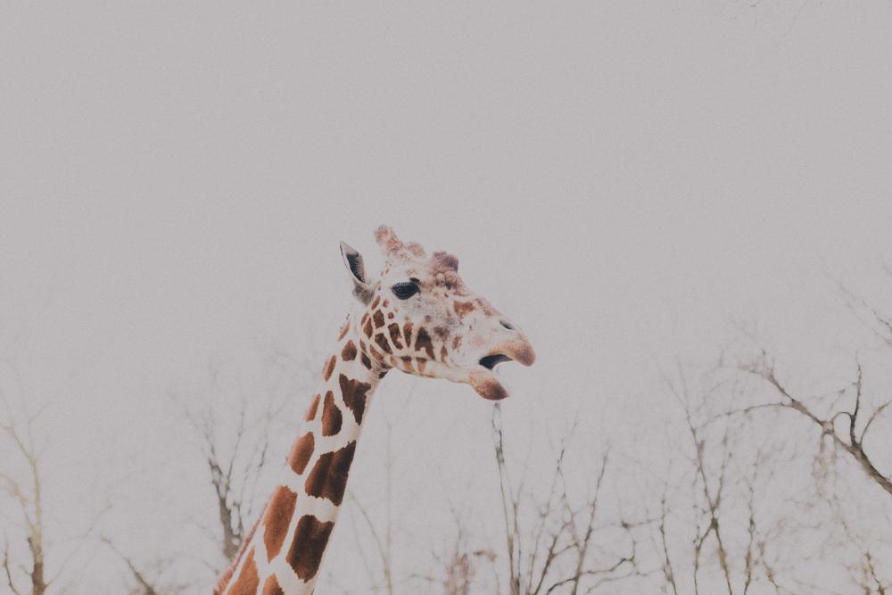 Zoo38 (1 of 1).jpg