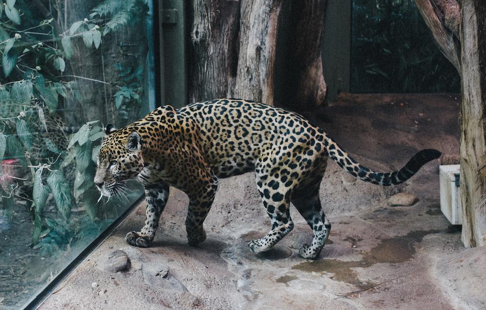 Zoo40 (1 of 1).jpg