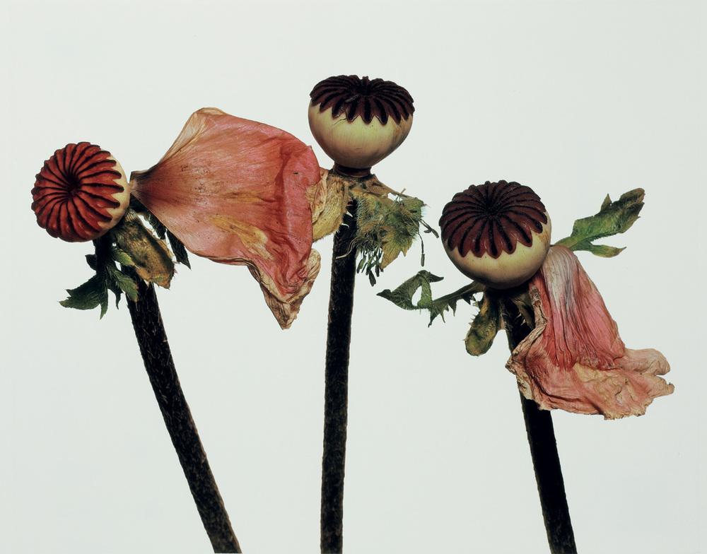 domus-01-language-of-flowers.jpg