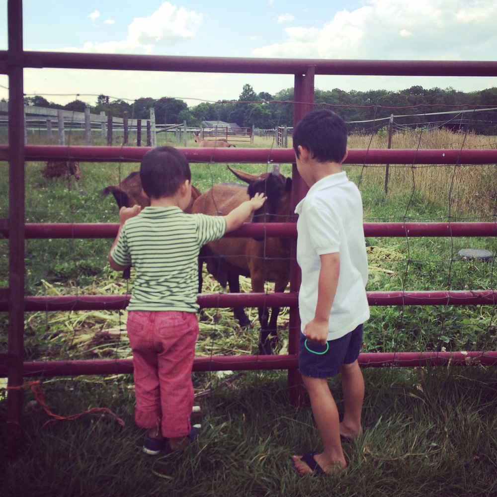 Summer Adventure No. 17: Tending the Goats at the CSA Farm.
