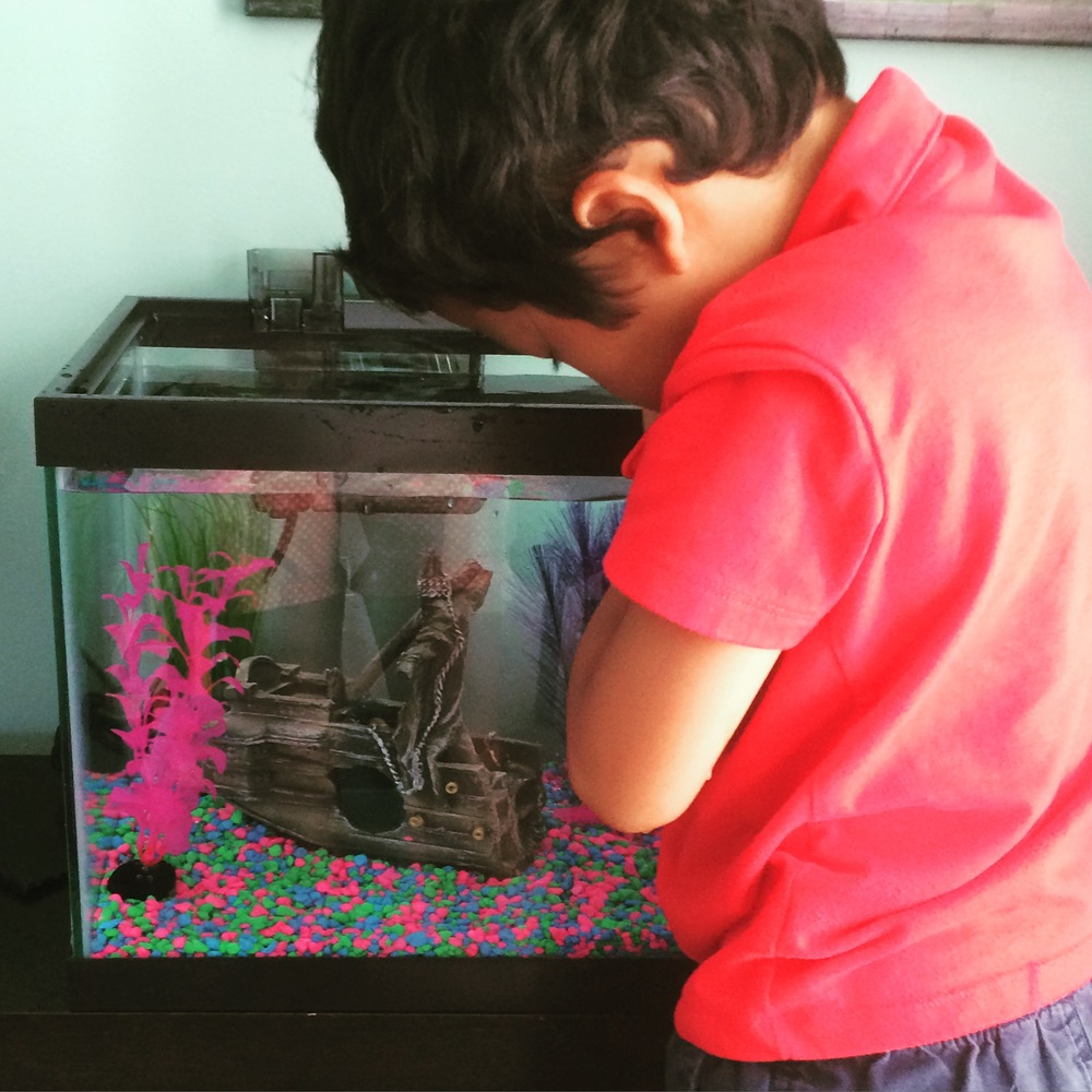 Summer Adventure No. 45: Setting up his *own* fish tank... While I realize that he really is growing up in the wrong decade. Look at those color choices!