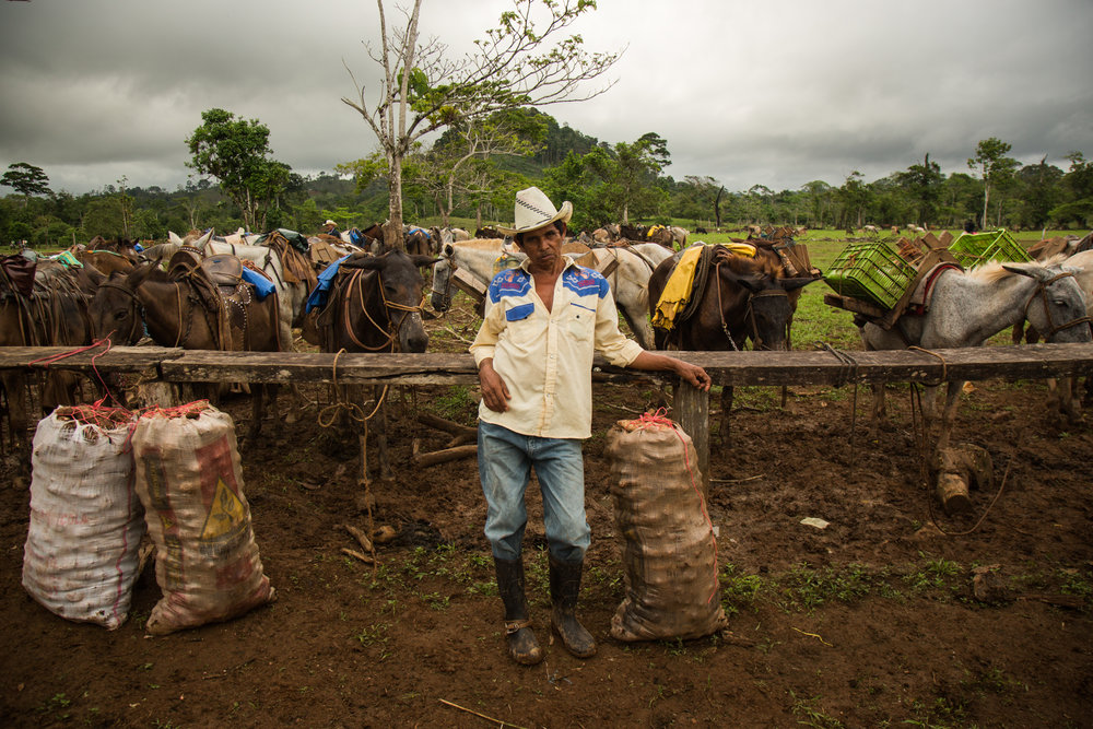 Esteban Fajardo, 60, of Provenir RAAS, with his horses where he has come to sell products at a market day in Palo Bonito on the banks of the Punta Gorda river in the early morning. If the Gran Canal project were to go forward, the river would be dredged as a shipping lane for cargo ships to pass from the Caribbean to the Pacific, removing farmer and indigenous communities.