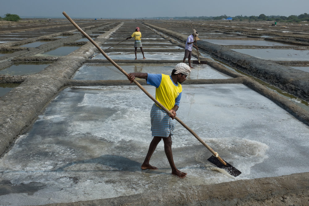 Men and women workers scrape, haul and carry salt in Marakannum, Tamil Nadu, India.