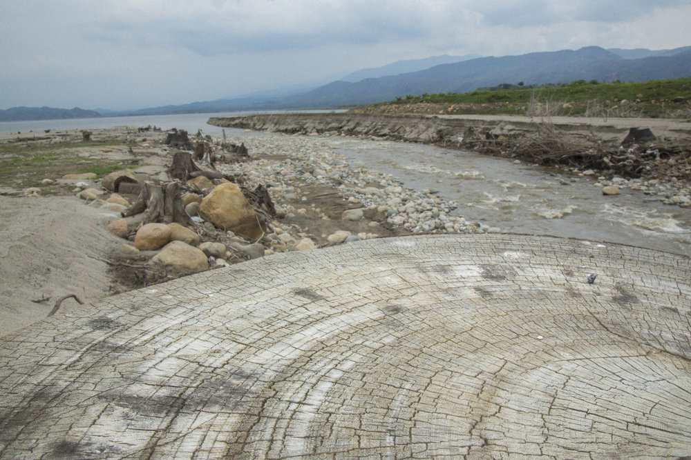 Stumps are all that is left of forest that once stood along the banks of a tributary river that flowed into the Magdalena River and was the source of fishing for many local fishermen before the construction of the Quimbo dam. Near Las Jaguas, Huila, Colombia. March 18, 2017