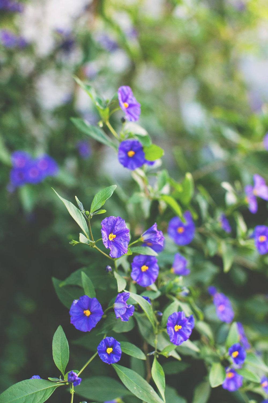 Baywood Garden