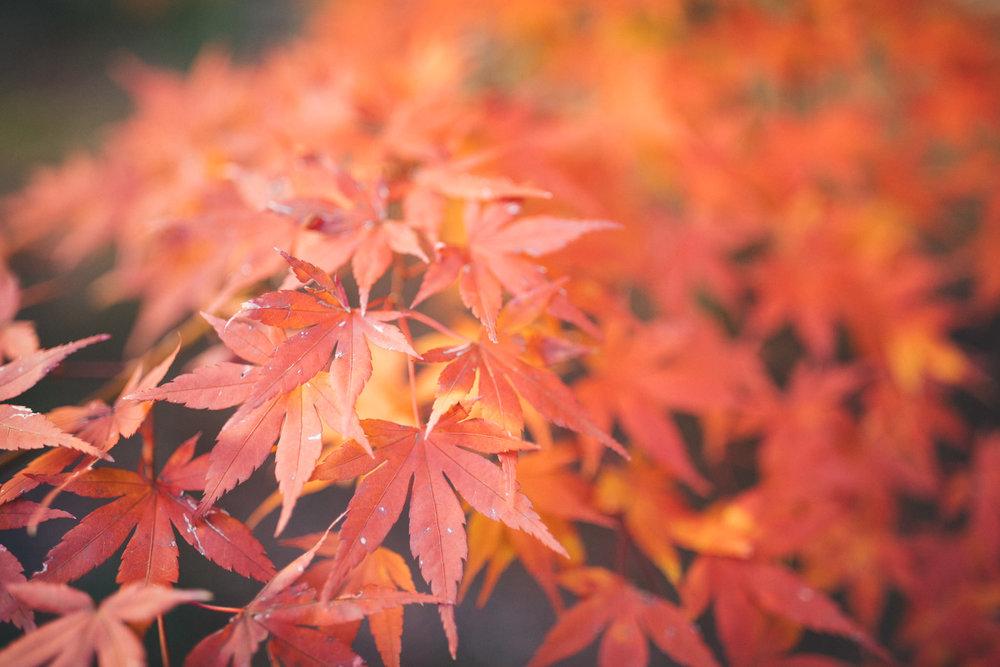 Ann-Marie-Yuen-Photography-0001.jpg