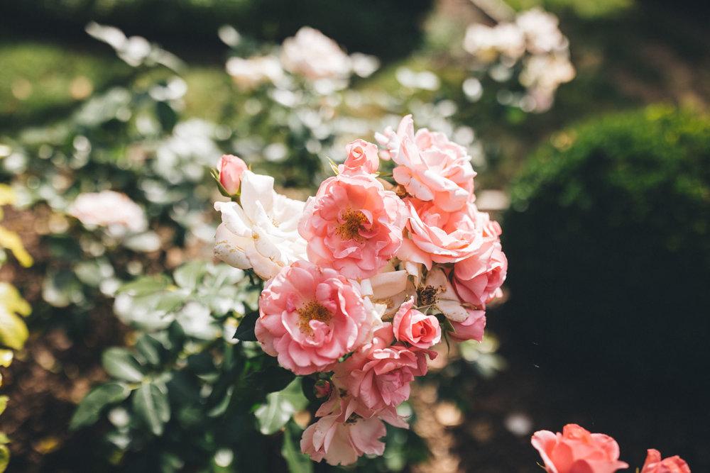 Ann-Marie-Yuen-Photography-0044.jpg