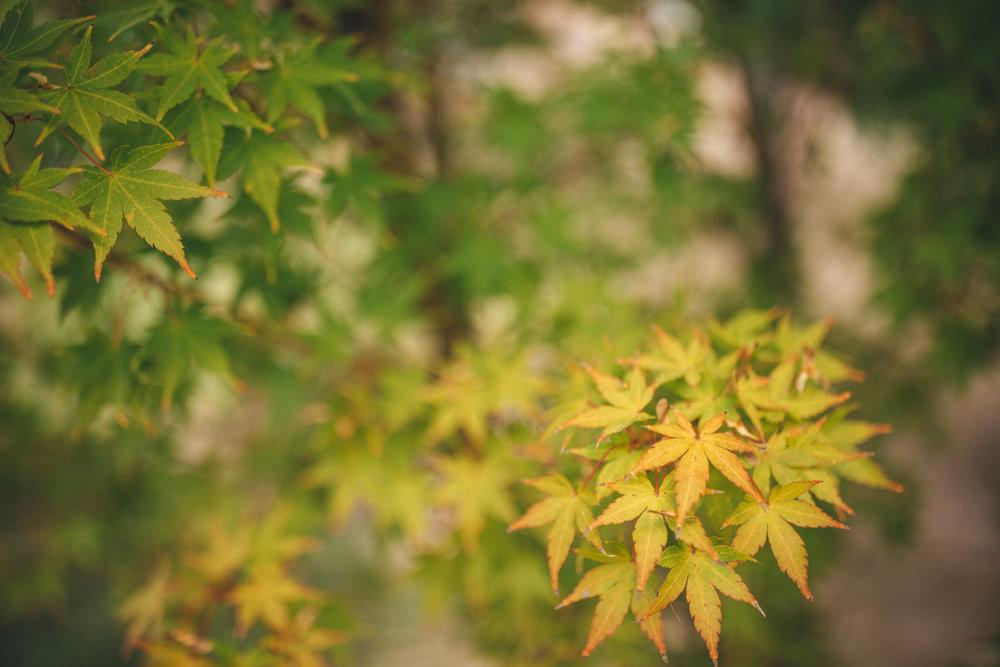 Ann-Marie-Yuen-Photography-0038.jpg