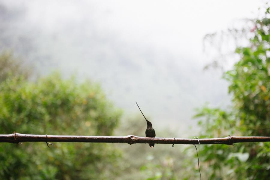 Ecuador2014-LowRes-140.jpg