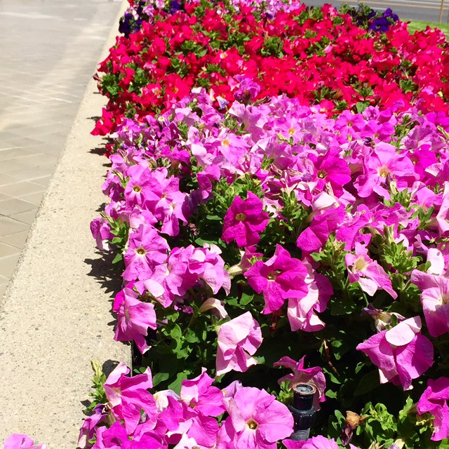 Just appreciating the lovely blooms in our landscaping at work.