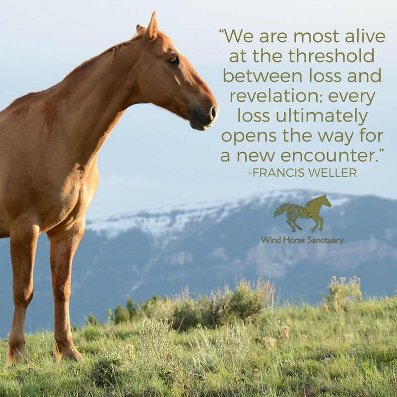 Grief Quote 3 - Wind Horse Sanctuary.jpg