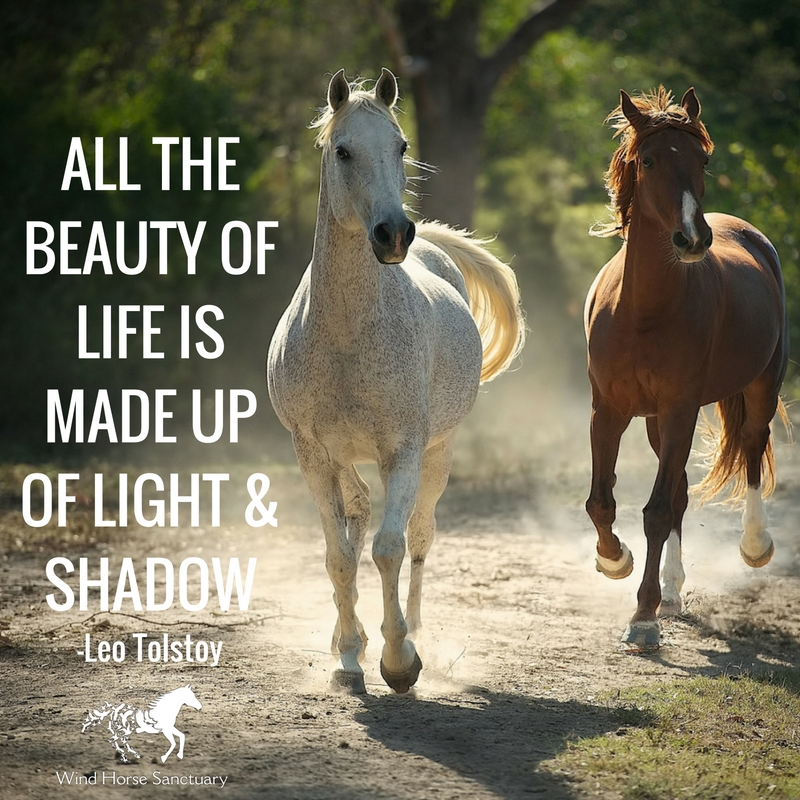 Embracing Our Shadow 4 - Wind Horse Sanctuary.jpg