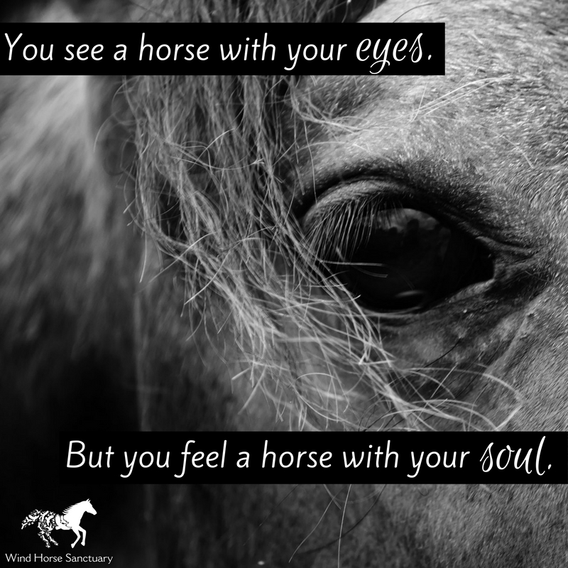 Inspirational Quote - Wind Horse Sanctuary.jpg