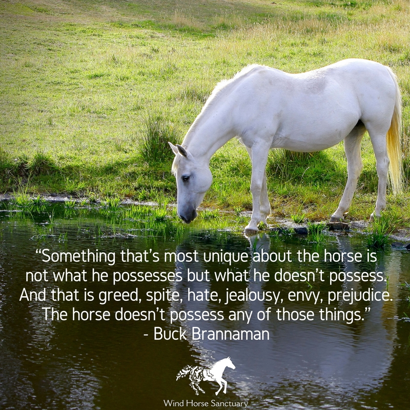 Inspirational Quote 4 - Wind Horse Sanctuary.jpg