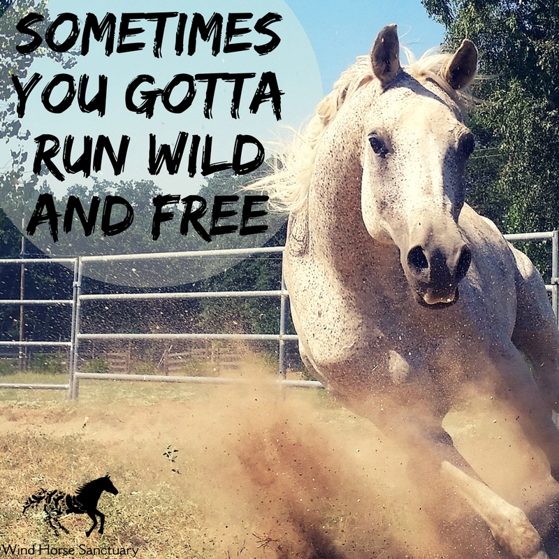 Wild & Free Quote - Wind Horse Sanctuary.jpg