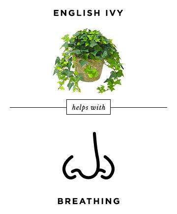 01-english-ivy.jpg