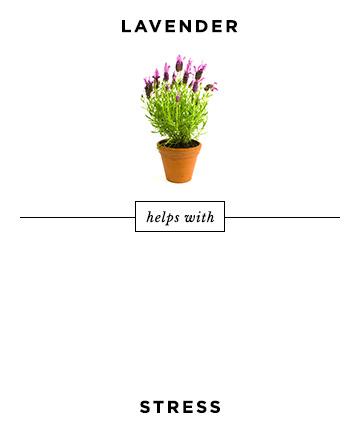 03-lavender.jpg