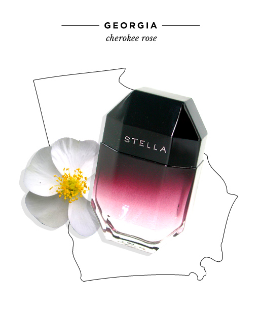 state-fragrances-georgia-cherokee-rose.jpg