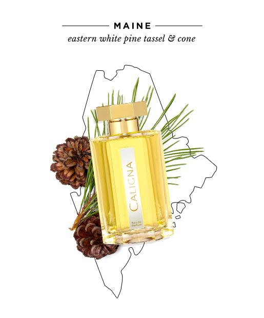 state-fragrances-maine-pines.jpg