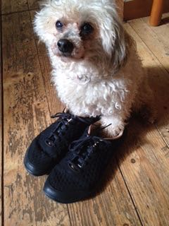 Oliver Braveheart loves his Mum's new minimal shoes. They are Vivobarefoots and came from Sole Mechanics. Oliver's Mum is in the running to win a pair of Alignment Socks. Looking Good Oliver! See week 1 Blogpost for details.
