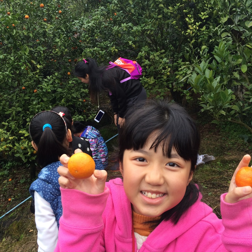 Cong Hua, Guangdong - Our students and teachers visited an orchard.