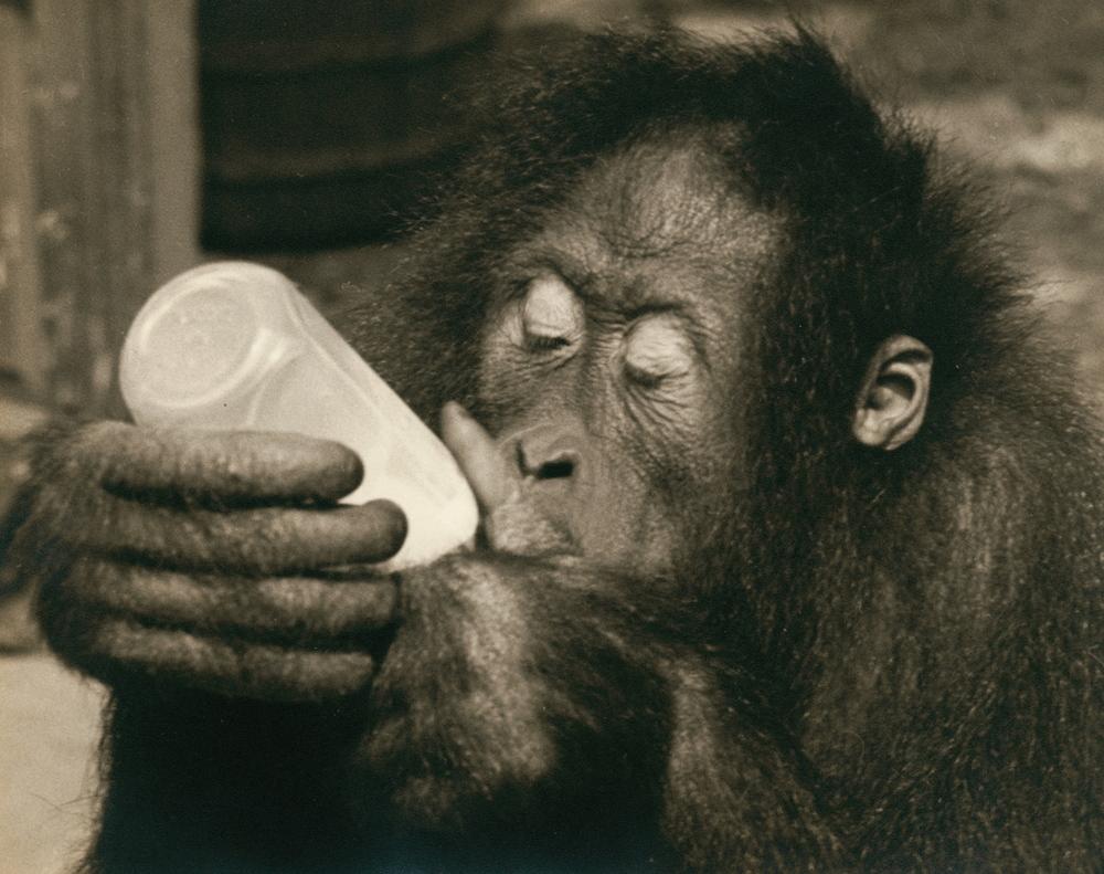 Cindy drinking.jpg