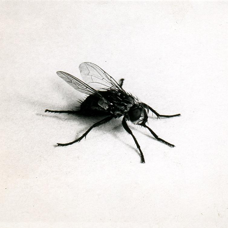 fly 1.jpg
