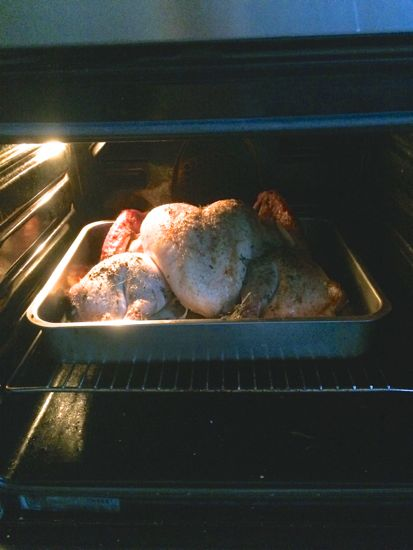 Cozy in the oven.