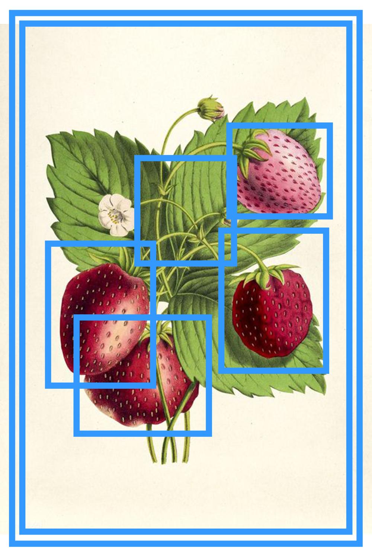 stawberri zine.png
