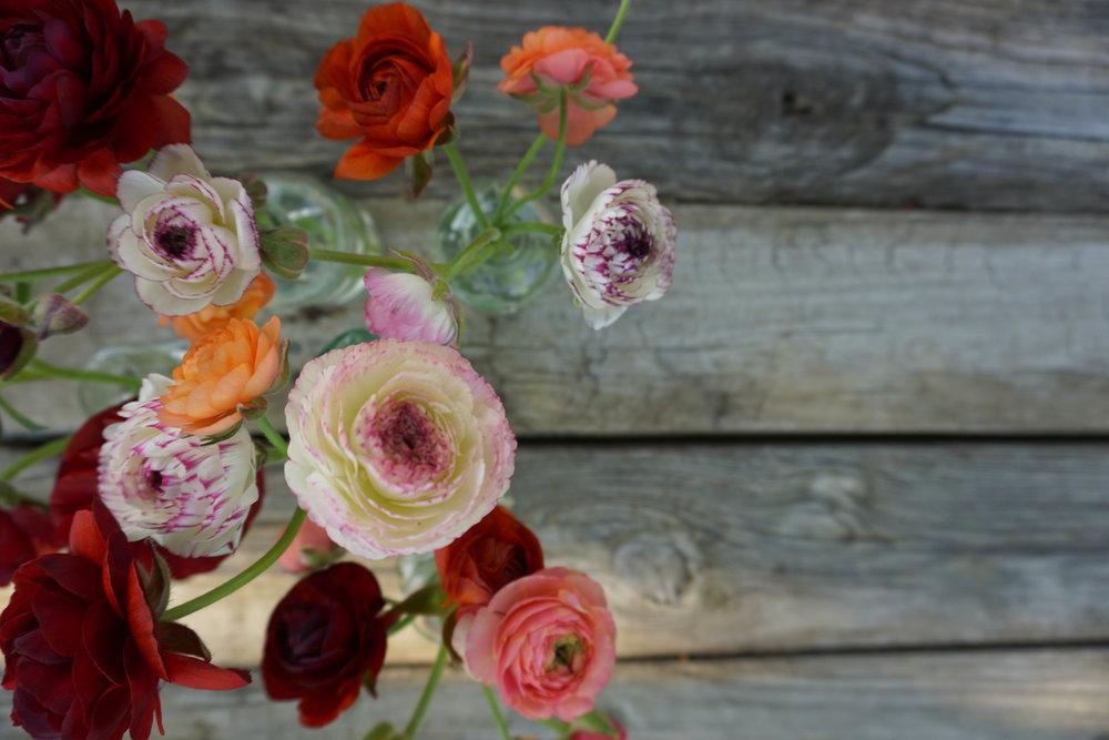 last season's ranunculus blooms
