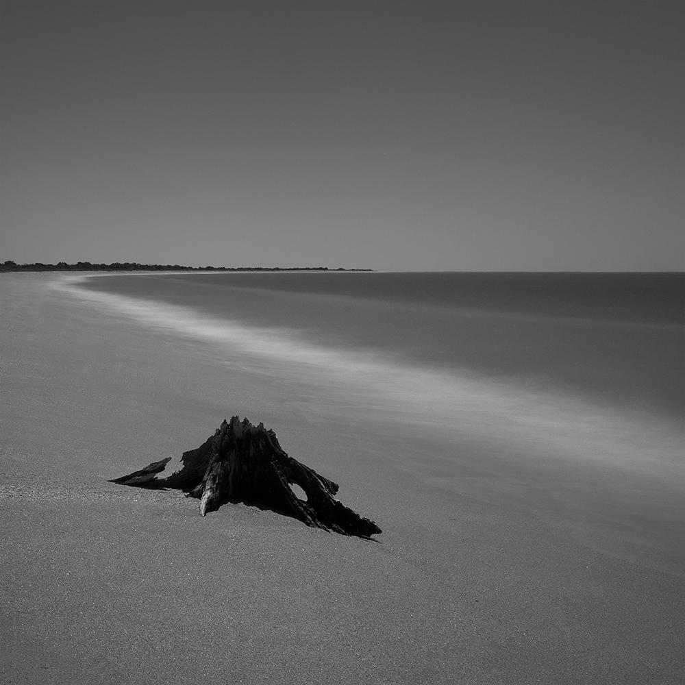Springer__2__Nature__Beach_Crawl.jpg