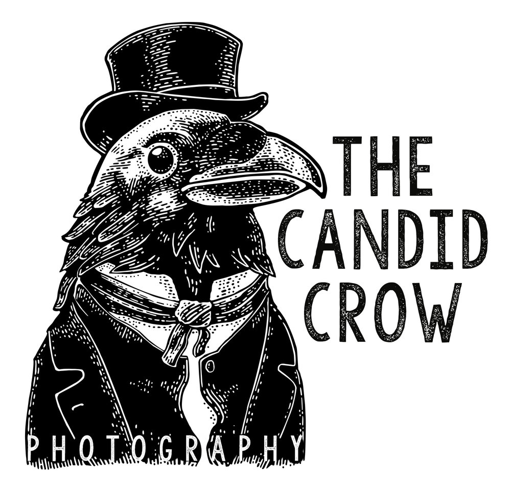 The Candid Crow