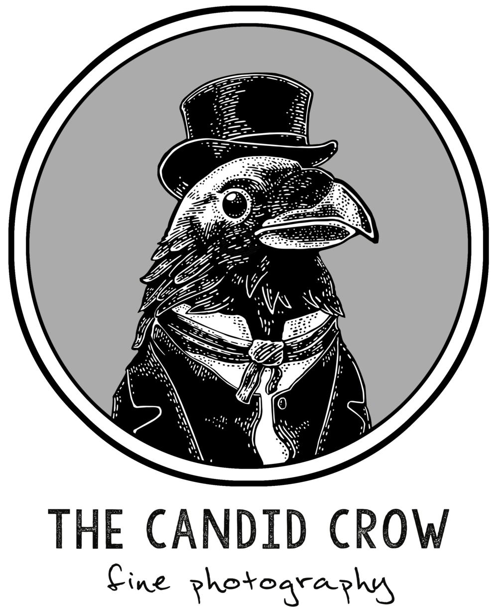 The Candid Crow Photo