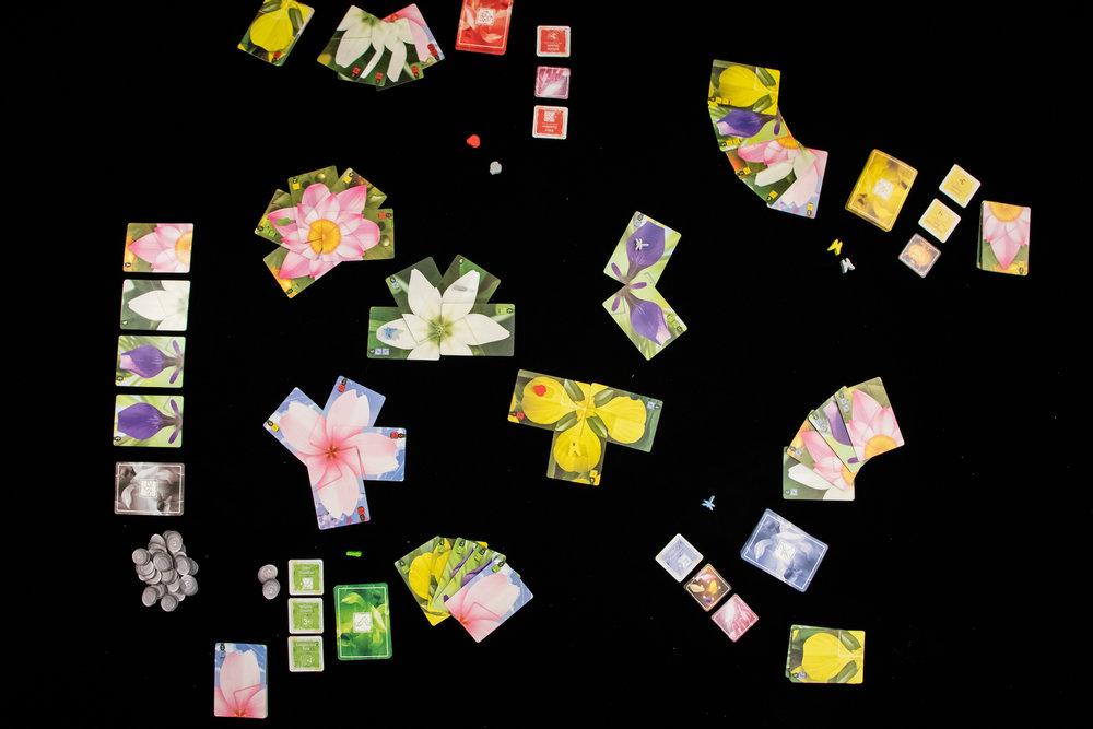 Lotus (1 of 6).jpg