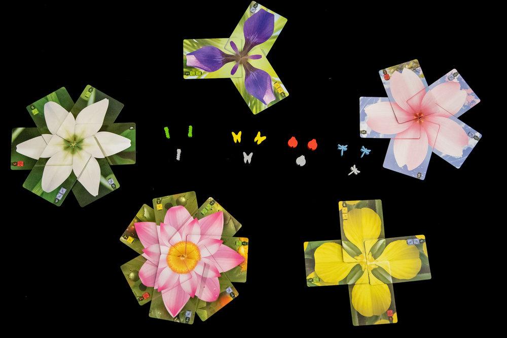 Lotus (3 of 6).jpg