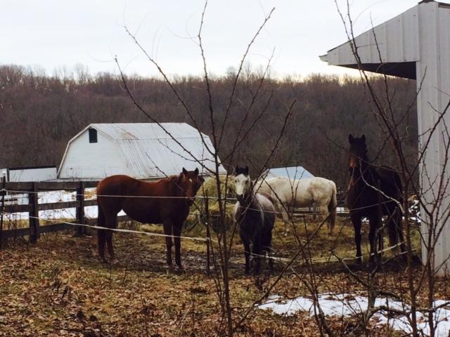 curious horseys. ♡