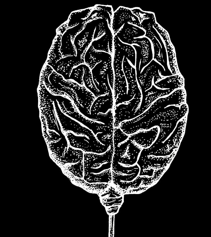 Brain-2.jpg