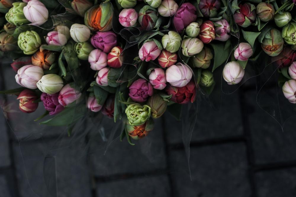 tulips | s.hellsten