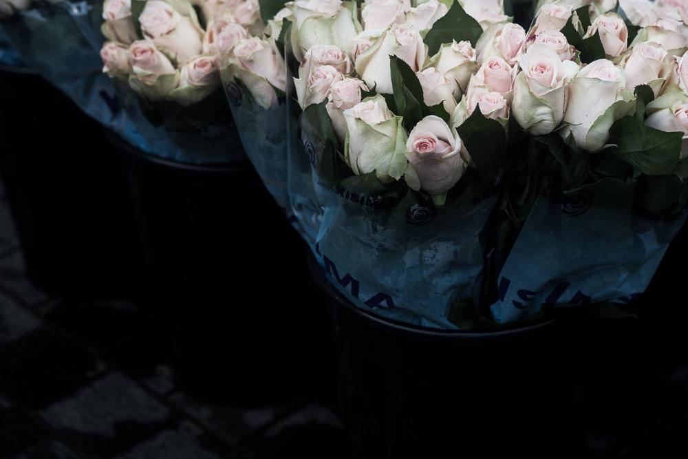 roses | s.hellsten