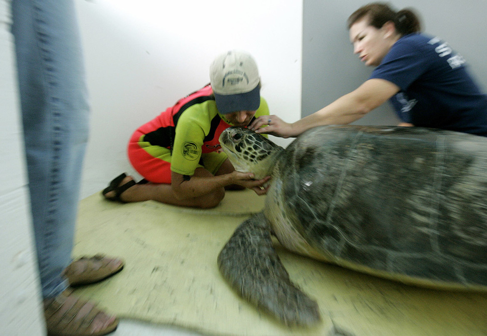 Virginia Aquarium Stranding Response Team