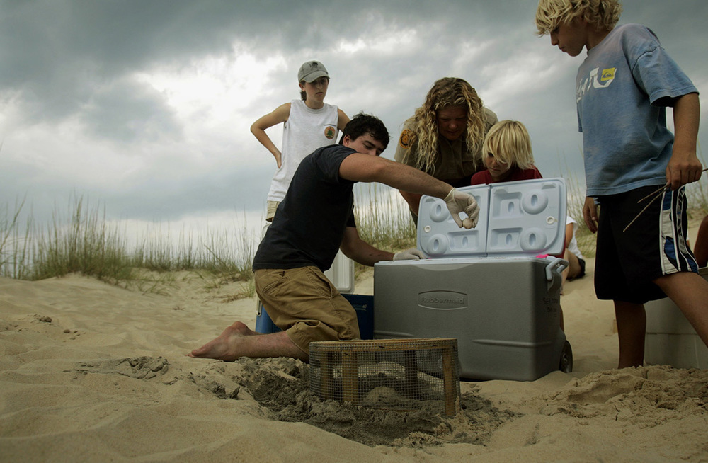 Patrick Hegge, was an intern with Back Bay National Wildlife Refuge, here he works to help move a loggerhead nest to the Back Bay nursery site behind the dunes.