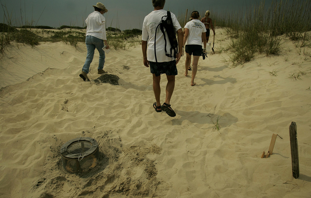 Back Bay National Wildlife Refuge moved a loggerhead sea turtle nest to the Back Bay nursery site behind the dunes.