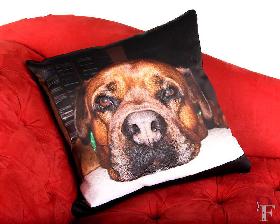 We use state of the art printing technology to ensure that your photos look beautiful and are long lasting.  Our pillow fabric is snuggly soft.  Our pet bed fabric is durable.  All of our products have removable, washable covers.