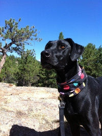 Molly Camping in Estes Park, Colorado