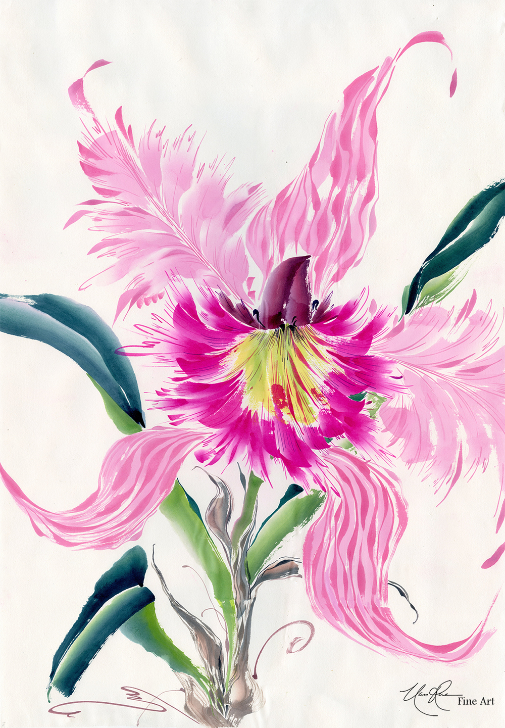 Cattleya: Studies in Pink IV