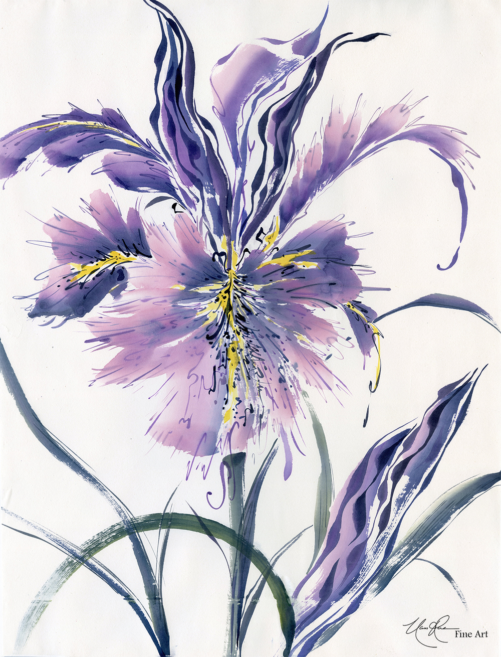 Designing Iris