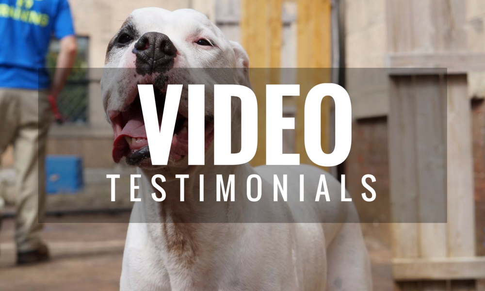 VIDEO DOG TRAINING TESTIMONIALS
