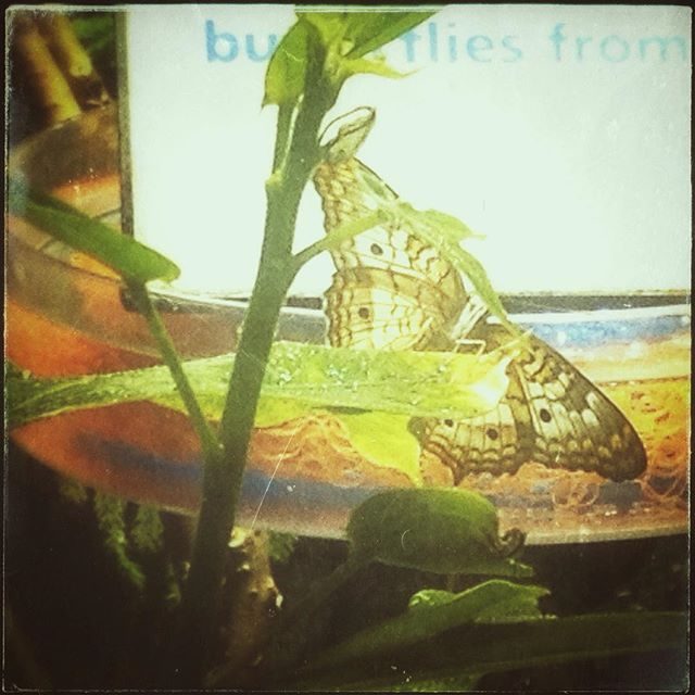 Butterflies!!! #butterfly #nature