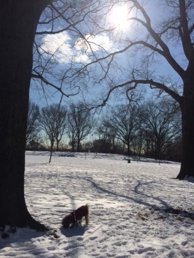 A sunny, sub-zero walk at the park.